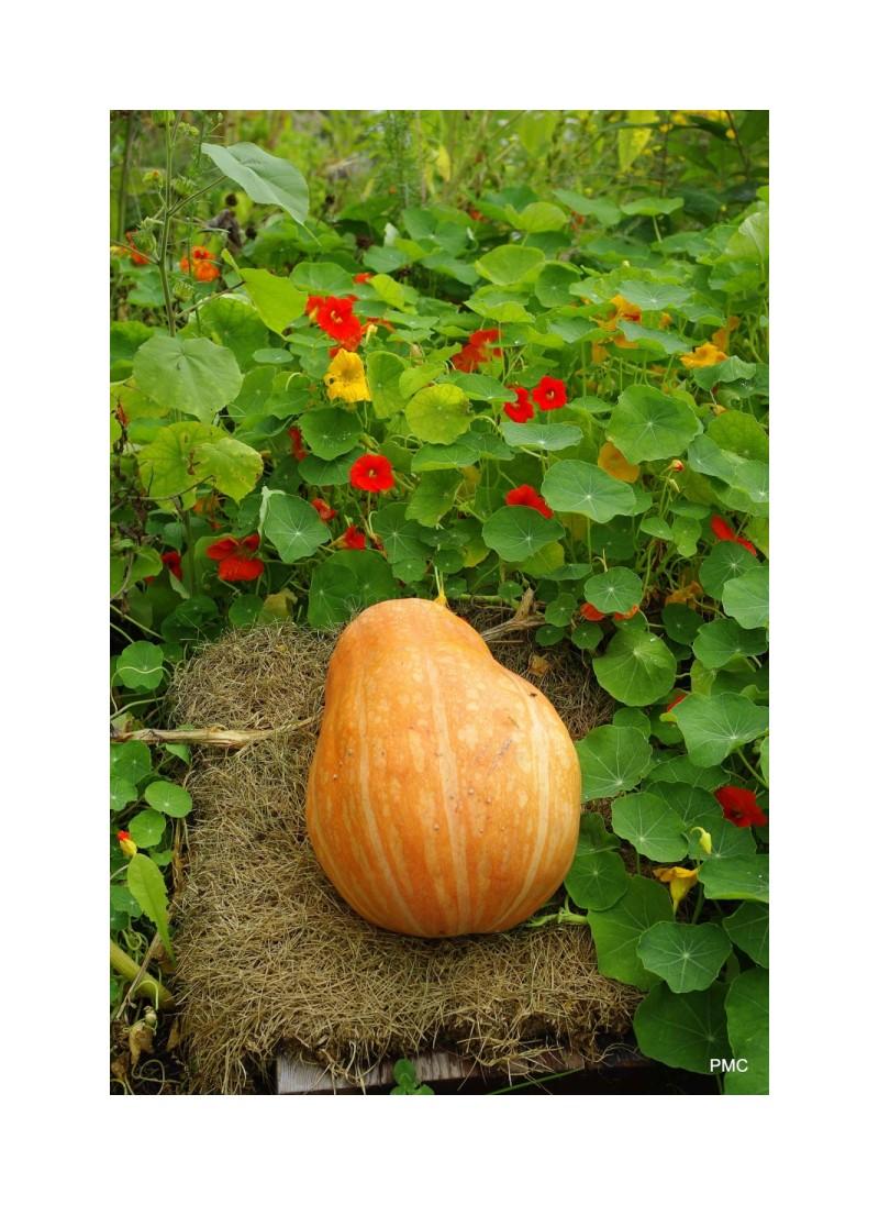 Pumpkin Nest