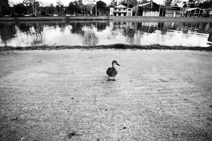 Yarra riverside Melbourne Austrailia,2008