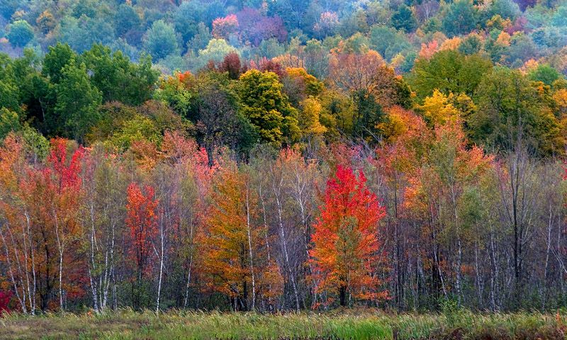 Fall Colors in Granby, Quebec