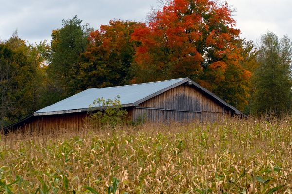 Old Canadian Farm in Autumn