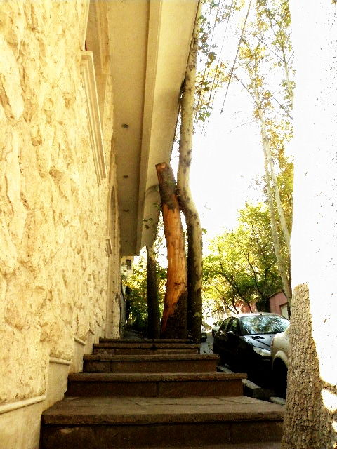 column or Tree?