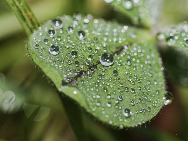 A season for droplets ...