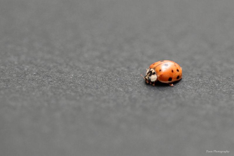 Ladybug ...
