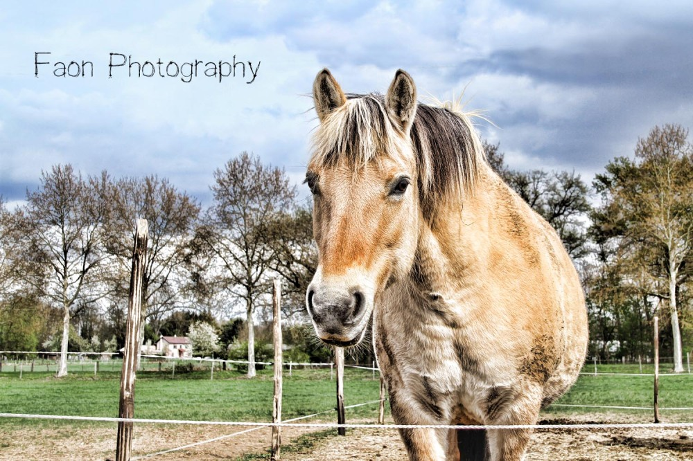Wild horse #1