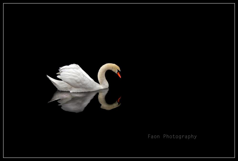 Swan lake ...