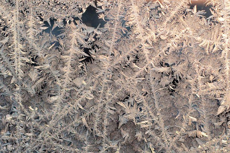 ice roses V