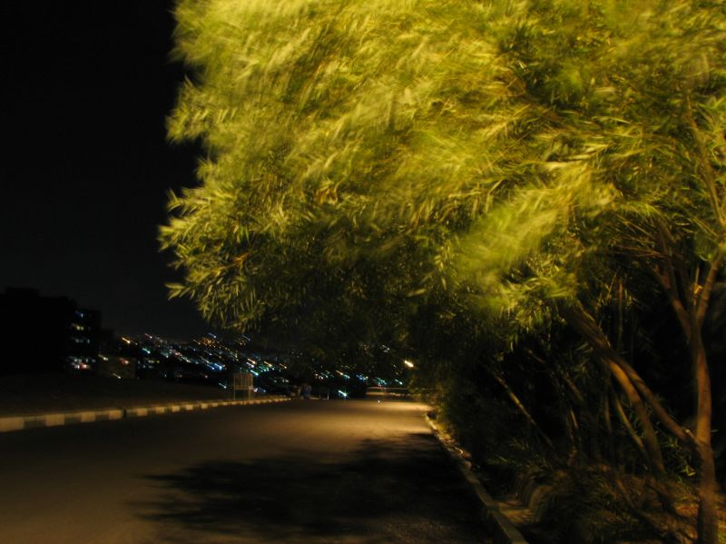 Green Tree in the Ngiht