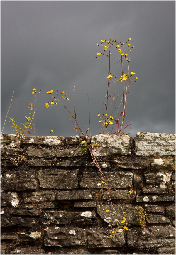 Flowers among the ruins
