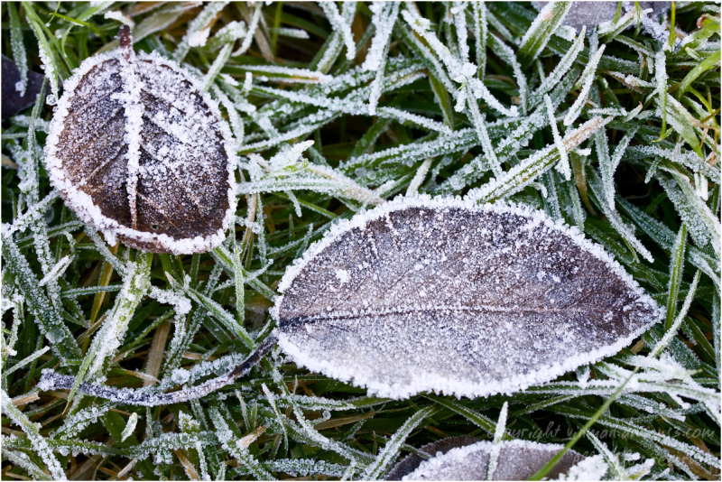 A Hard Frost