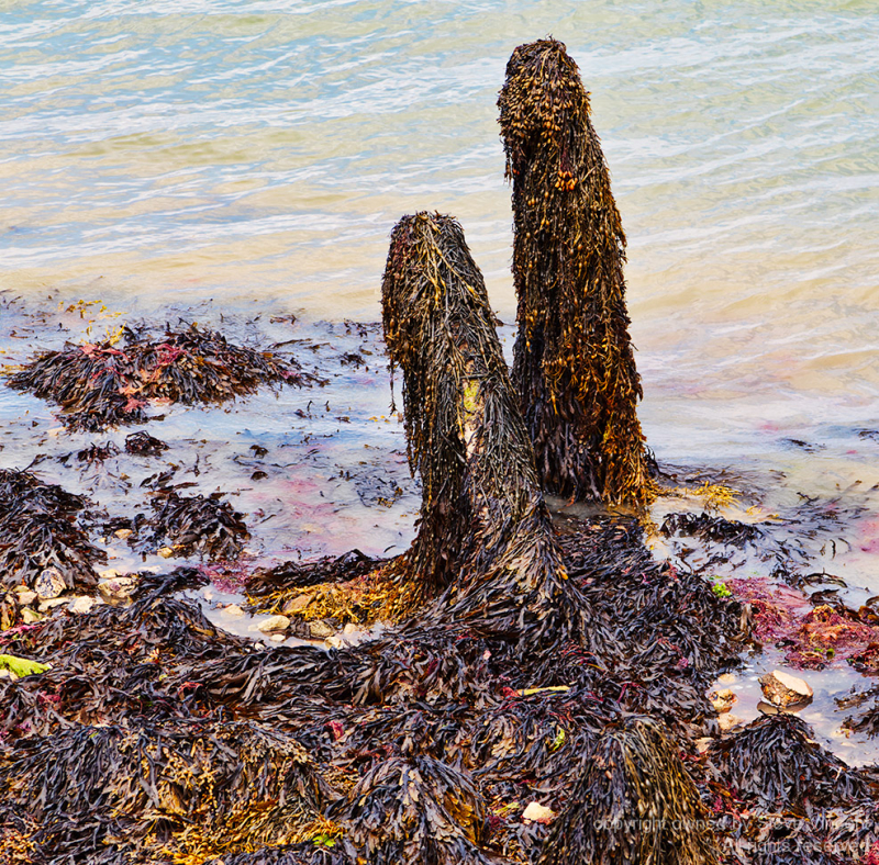 Colourful seaweed left by the tide