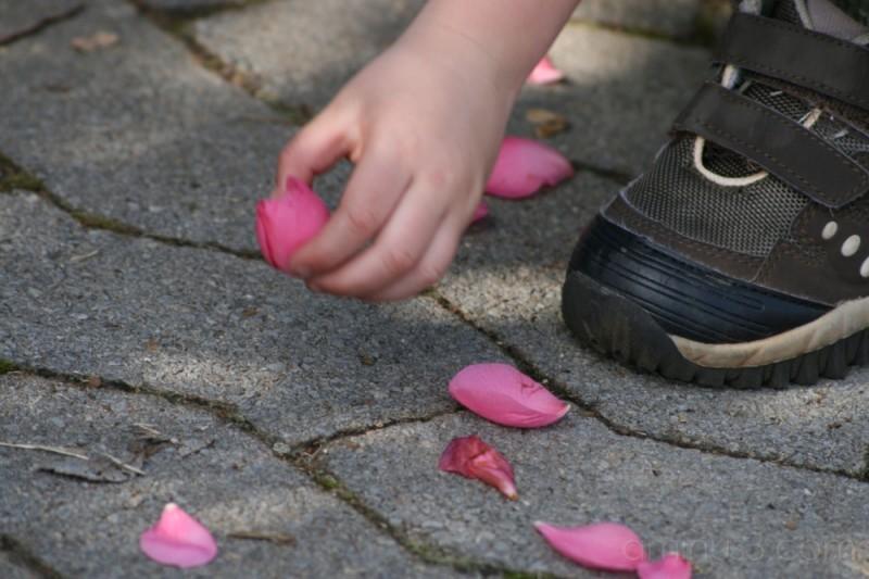 Picking Up Petals