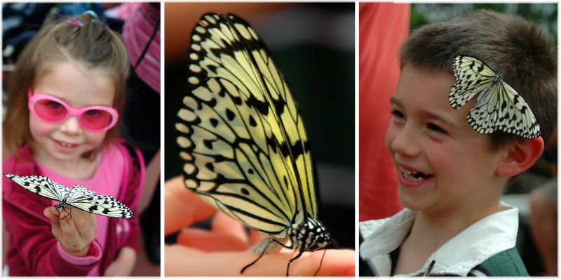 Butterfly Show 1