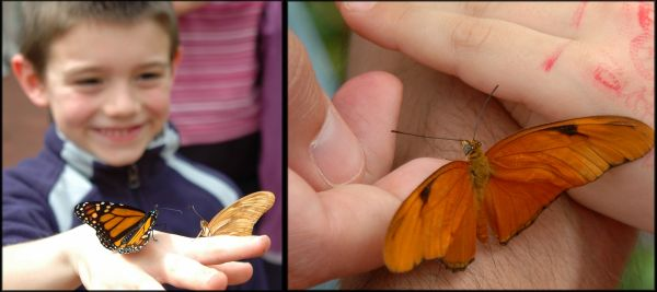 Butterfly Show 2
