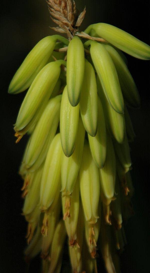 Bananas???