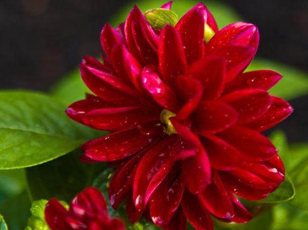 Practice Flower 1