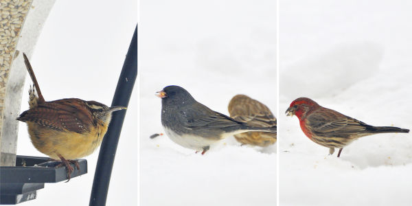 more visitors to my feeders
