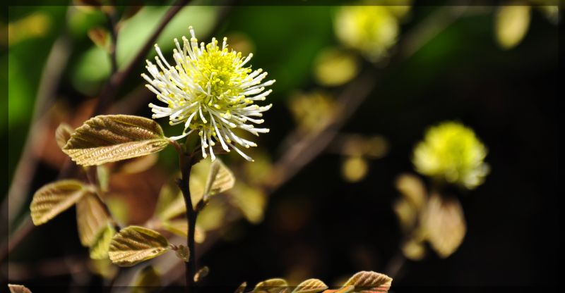 Zoo Flower