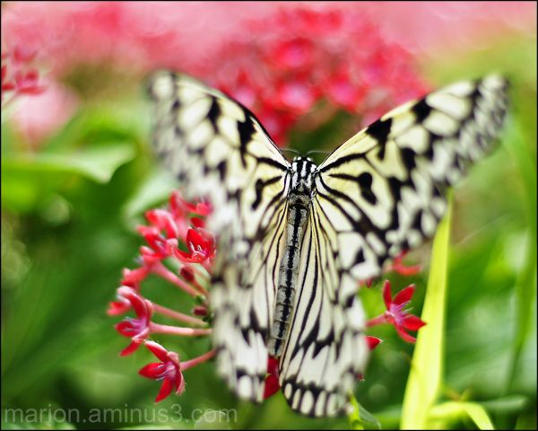 Butterfly Show 2010 #1