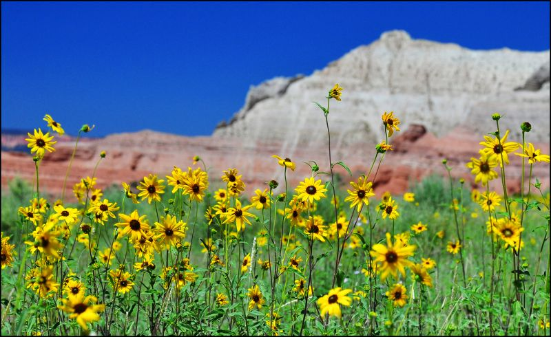Kodachrome State Park Utah #1