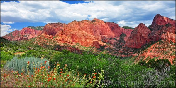 North Zion Nation Park #1