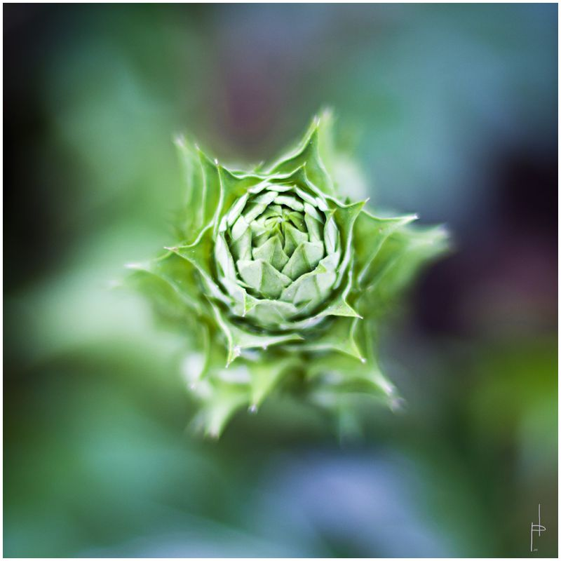 Flora escondida