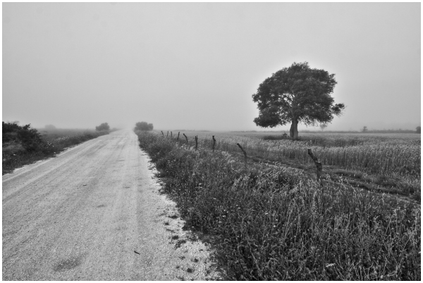 Solo en la niebla