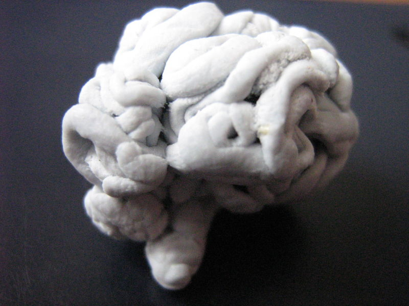 Day 21: Blu-tack Brain