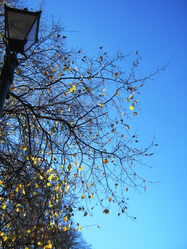 Day 241: Tree