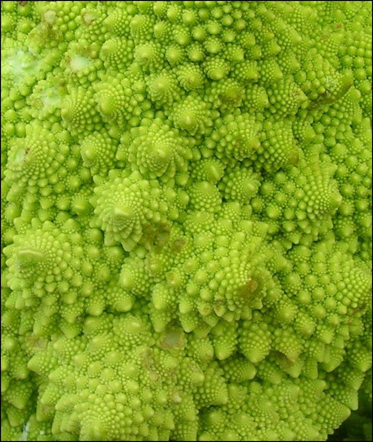 Romanesque cauliflower, closeup