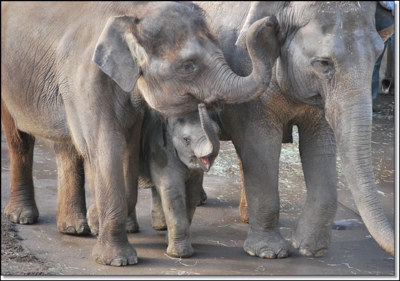 animals zoo elephants