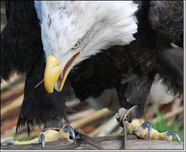 birds animals zoo