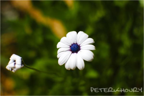 Petal Envy