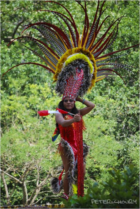 Peruvian Peacock
