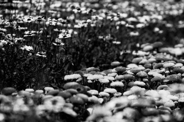 گل های رنگارنگ