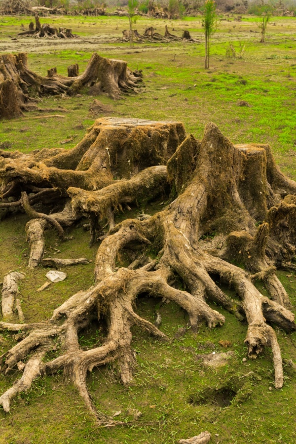 ریشه های خونین
