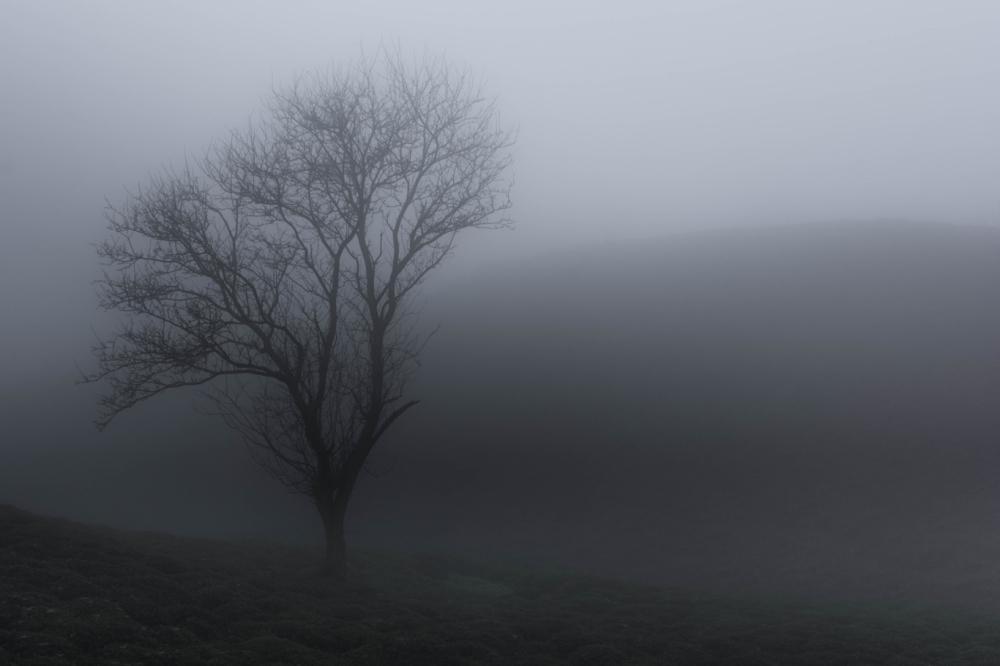 شکفته در مه