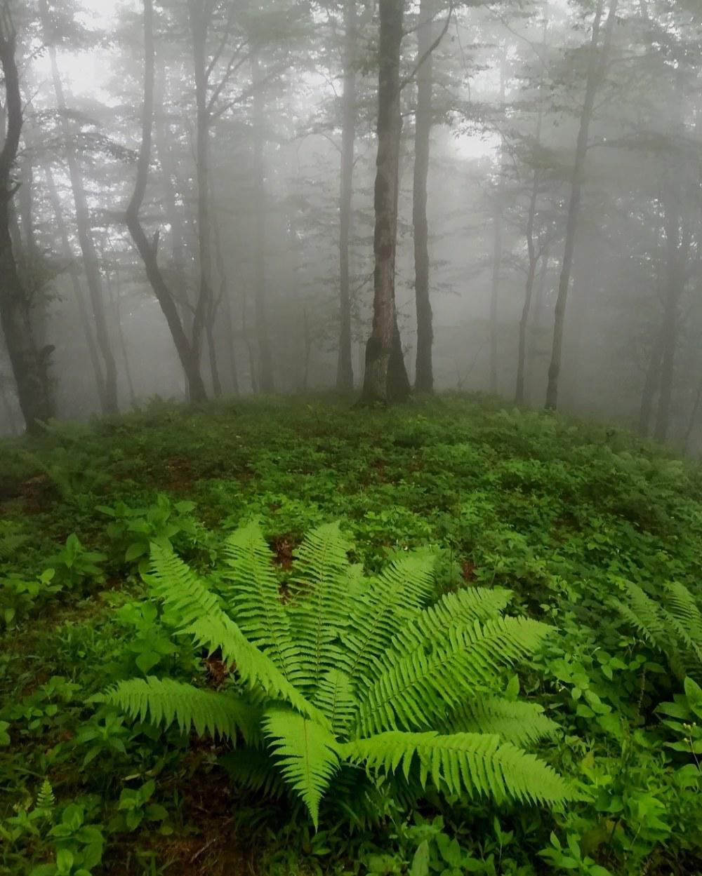 در اعماق جنگل های گیلان