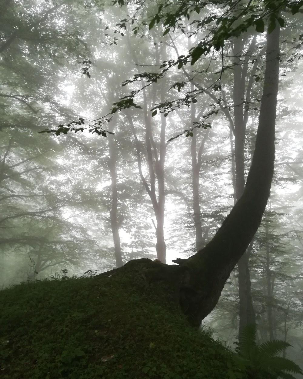 در اعماق جنگل