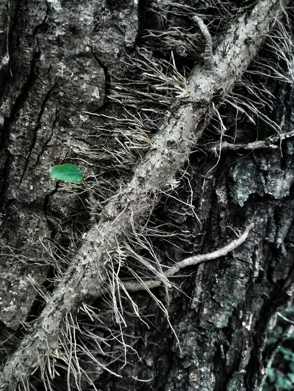 سبز میشود