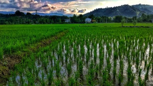 مزرعه ای رو ب آسمان