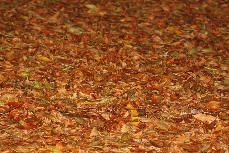 Moquette d'automne