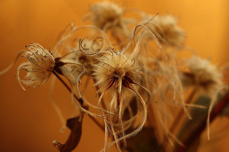 fleursauvage