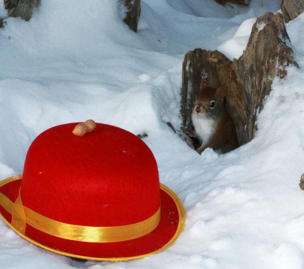 Bonne année de la part de tous les écureuils
