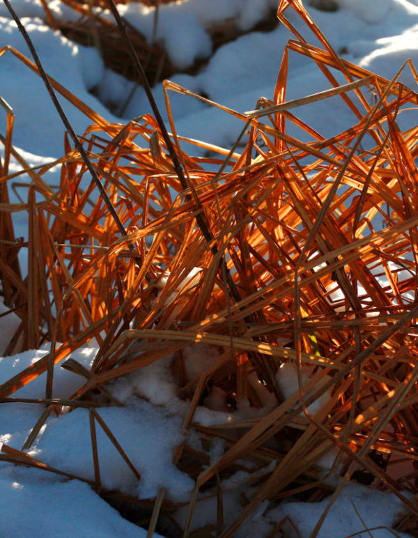 Herbes des neiges