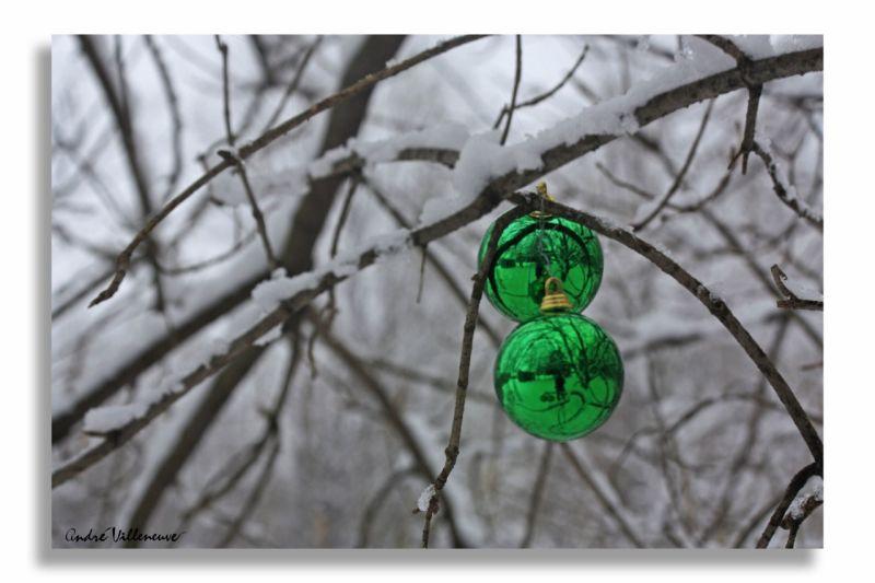 Boules vertes des bois