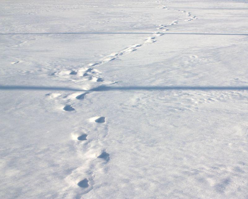 Shadows and Footprints