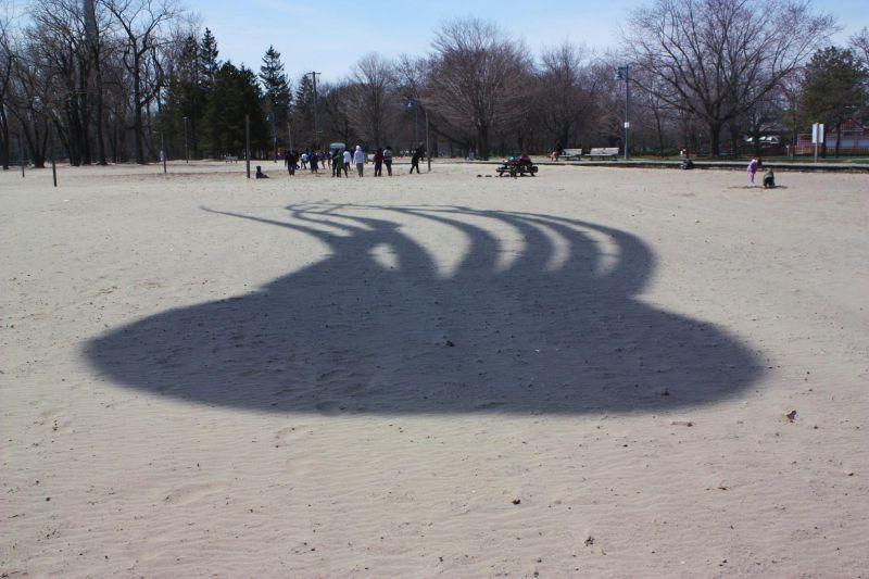 A shadow passes across the beach...