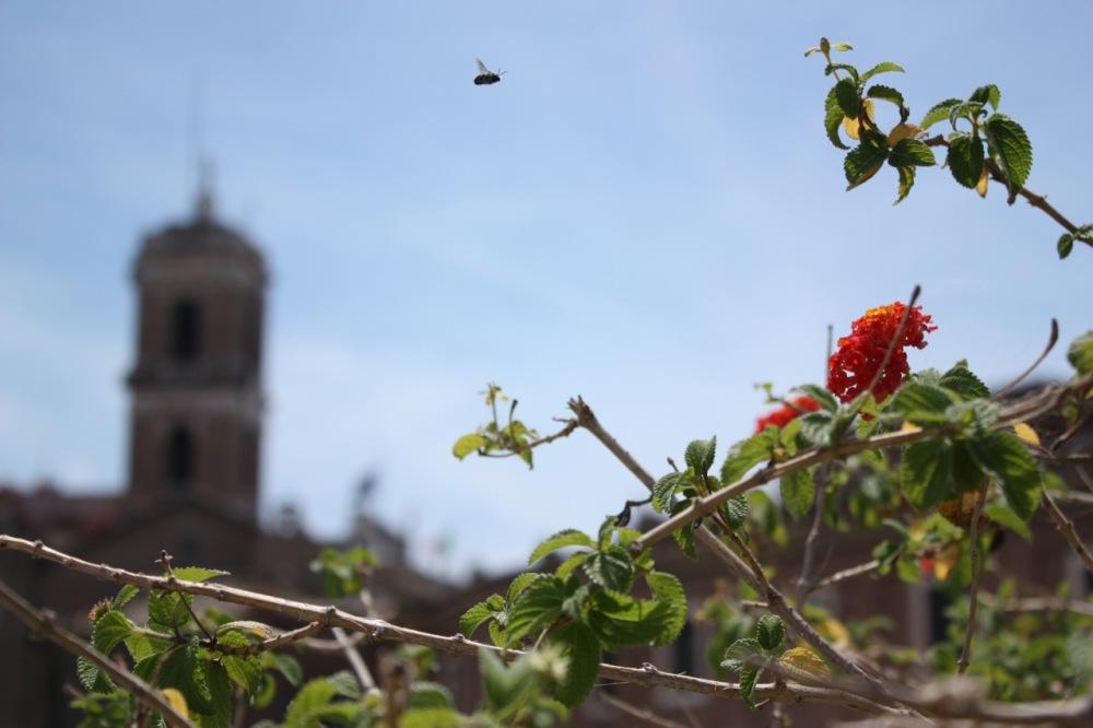 Roman Bee-Bomb