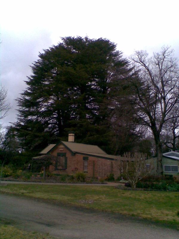 Tree & Building