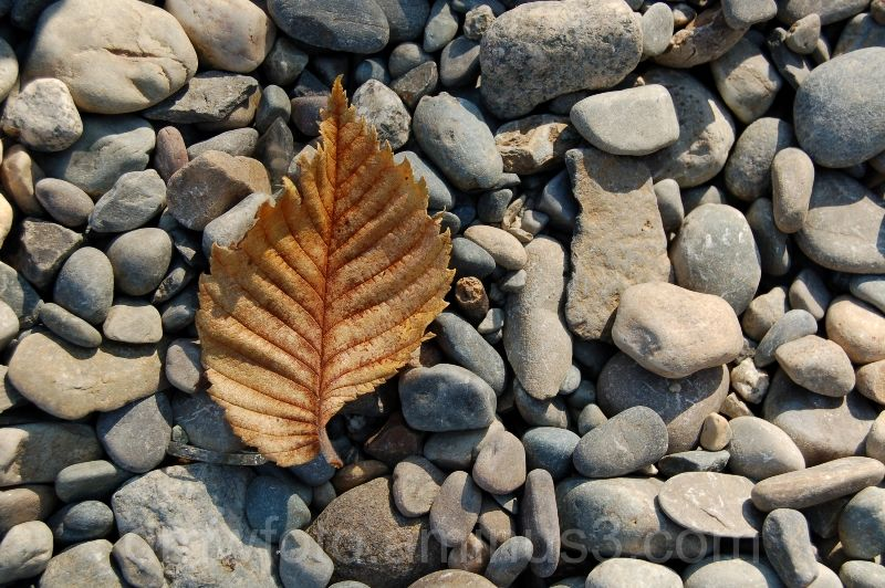 Leaf Stands On Its Own